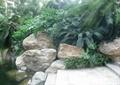 駁岸臺階,水體景觀,假山石頭