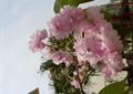 花朵,花卉植物,特写