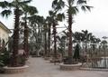 滨水别墅庭院景观,树池,廊架