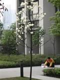 草坪燈,園路,灌木帶