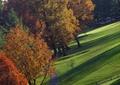 公园道路,草坪,落叶大乔木