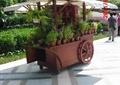 植物售卖车