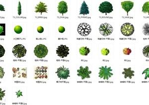 ps彩屏植物素材设计