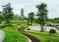 台阶式种植,小广场景观,广场铺装,树池