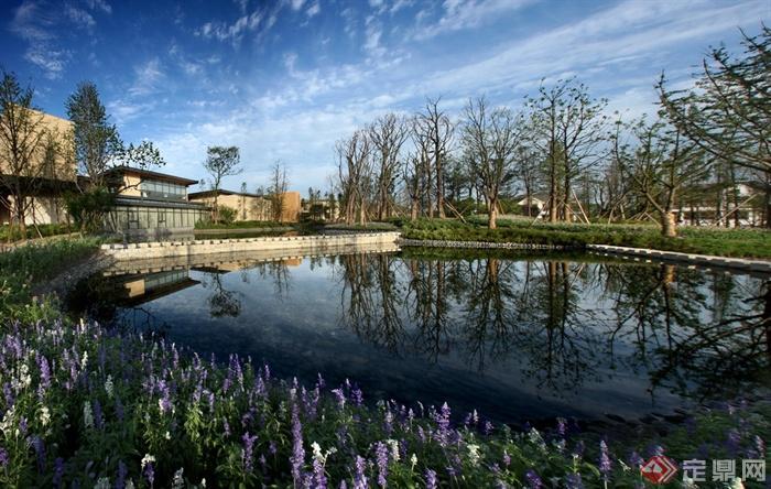 住宅去水池景观,水池,驳岸薰衣草