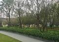 种植小区中庭景观,种植池,绿篱,草坪
