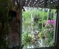 置石,花卉植物