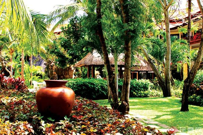 陶瓷罐,灌木丛,草坪