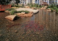 鱼池,石头,近水平台