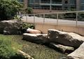 水体景观,水池景观,假山石头,绿化带,栏杆围栏