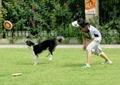 园艺生活,狗,草坪