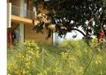 别墅花园,庭院,庭院景观