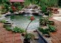 水池,假山水池,水钵,凉亭