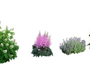 8丛花卉植物SU(草图大师)模型