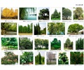 乔木,乔木植物,植物