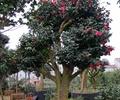 花卉樹木,樹木,樹木素材