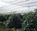 大棚,树木,树木植物