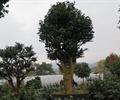 树木,树木植物