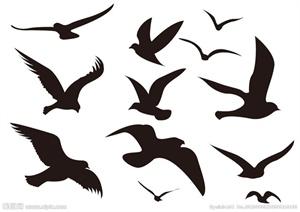 剪影鸟类贴图设计jpg素材